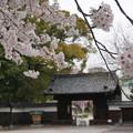 写真: 20150402徳川園