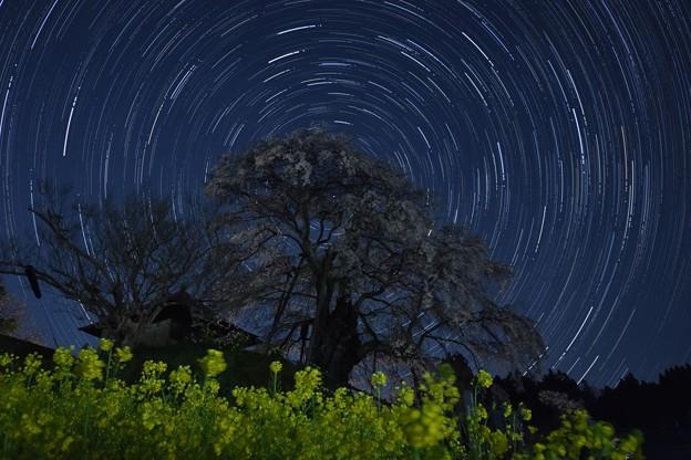 不動桜 星の軌道