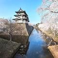Photos: 桜と弘前城