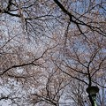 Photos: 地元の花見名所