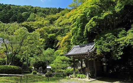 夏の金蔵寺06