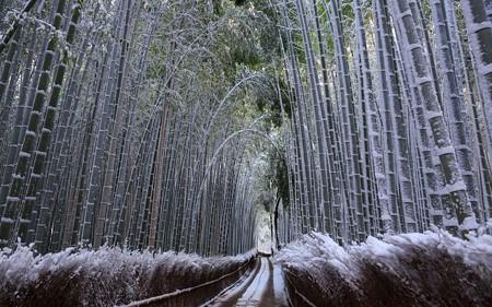 雪の嵯峨・竹林の道12