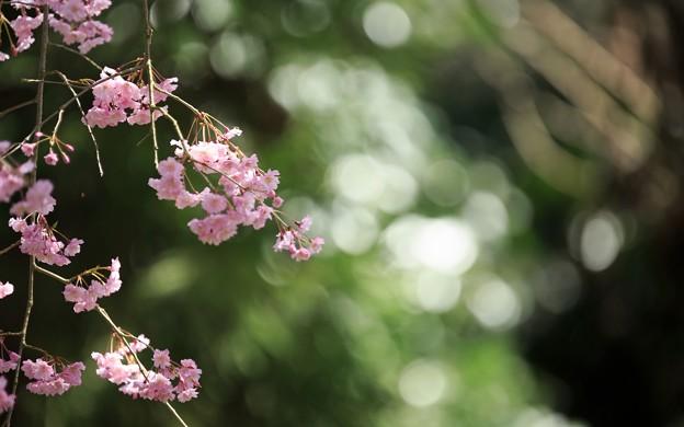 京都御苑42