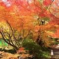 Photos: 神蔵寺22