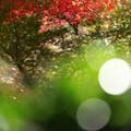 Photos: 神蔵寺20