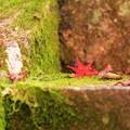 Photos: 神蔵寺18