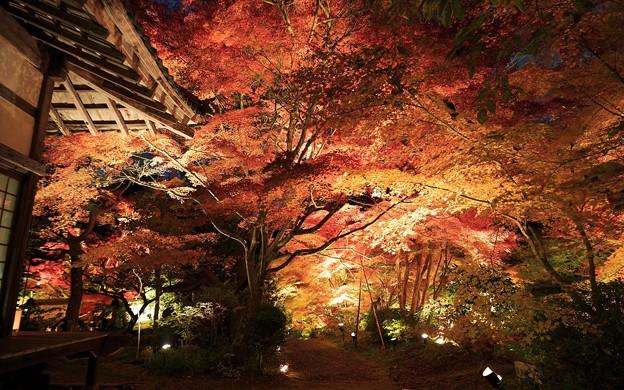 神蔵寺・ライトアップ23