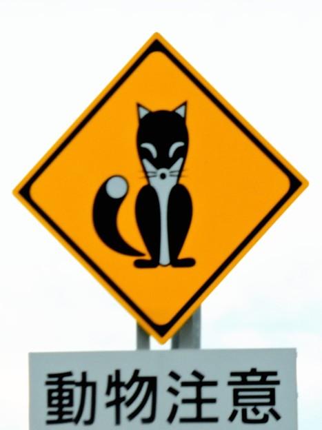 面白い標識