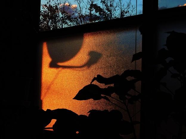 Photos: 窓辺の陽光