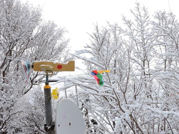 Photos: 雪景