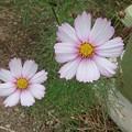 写真: 10/30に見た花3