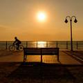 Photos: 夕日に照らされて