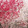 Photos: White & Red