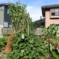 Photos: 畑6