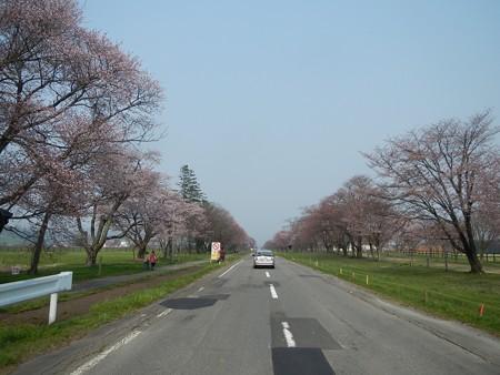 2015,4/28 静内 二十間道路桜並木1