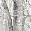 写真: 春の樹液