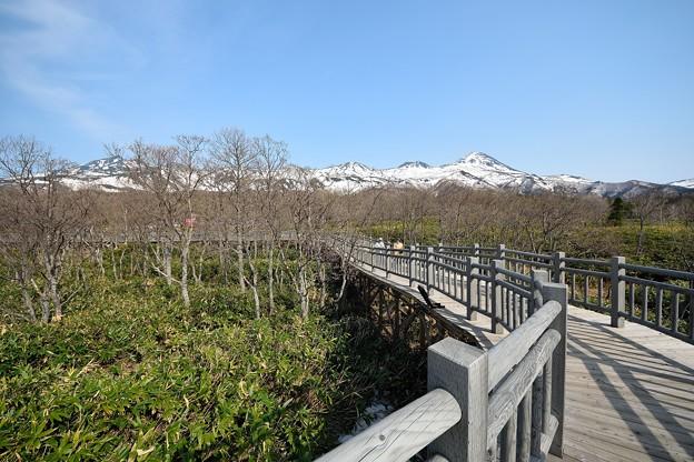 知床連山と遊歩道 (2)