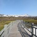 写真: 高架木道 (2)
