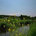花と富士 (2)
