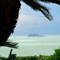 椰子と江ノ島-3