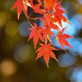 Photos: 紅葉 (3)