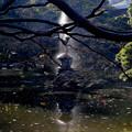 Photos: 鶴の噴水