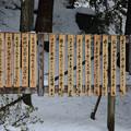 写真: 富士吉田川柳会