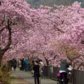 Photos: 河津にて