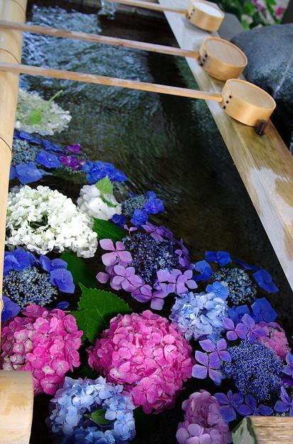 紫陽花神社(3)