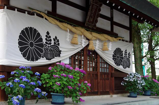 紫陽花神社(4)