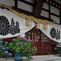 写真: 紫陽花神社(4)