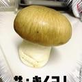 Photos: きのこ