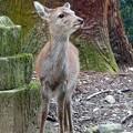 写真: バンビちゃん