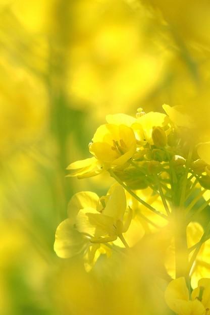 写真: 陽光