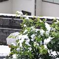 写真: 11月の雪