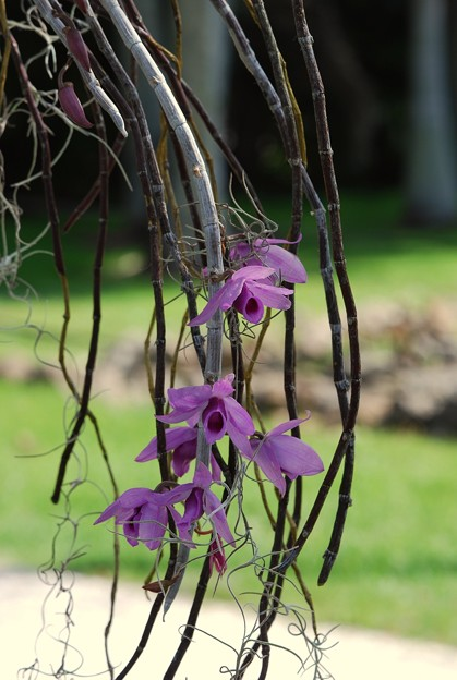 Orchids with Palm Tree 3-11-15