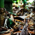 Bamboo Shoot 3-11-15