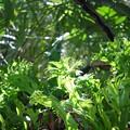 Shining Green 3-11-15