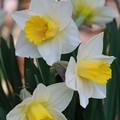Photos: Yellow Cups 5-9-15