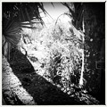 Palms and Spiderworts 4-21-16