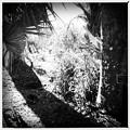 Photos: Palms and Spiderworts 4-21-16