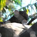 Photos: Leopard 6-4-16