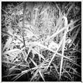 写真: Grass 6-18-16