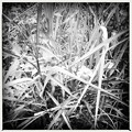Grass 6-18-16