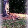 Photos: A Fox Squirrel 11-13-16