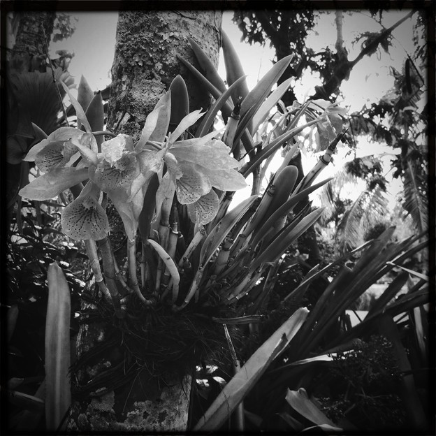 Happy Orchids 11-15-16