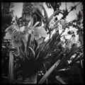 Photos: Happy Orchids 11-15-16