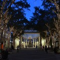 Photos: Naples Xmas 12-12-16