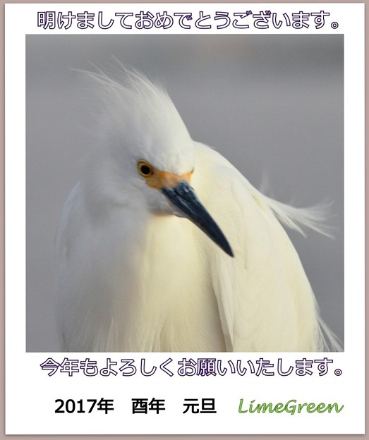 Photos: 年賀状_2017_蔵用