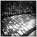 写真: The Fence 2-20-17